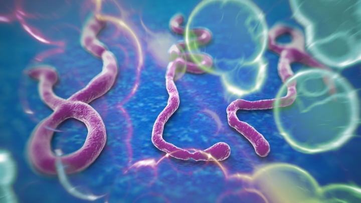 ebola-strand