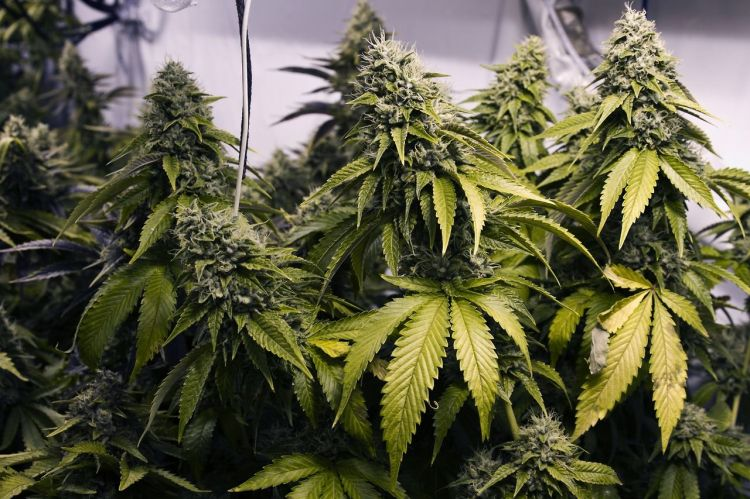 4th-cannabis-seed-logo