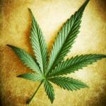 single cannabis leaf 280_0